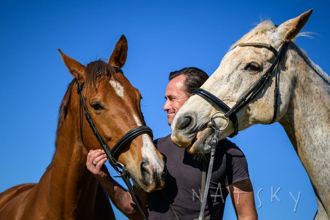 animal photography horses